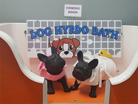 Dog Hydro Bath